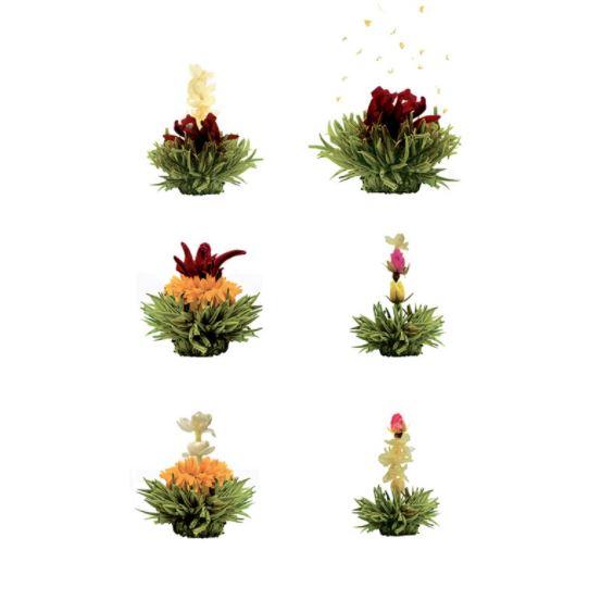 Virágzó tea válogatás fadobozban
